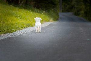 dog-1543329_640